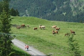 2009_06Jungfraujoch5258.JPG