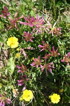 2009_07Chamonix_Mont_Blanc6855.JPG