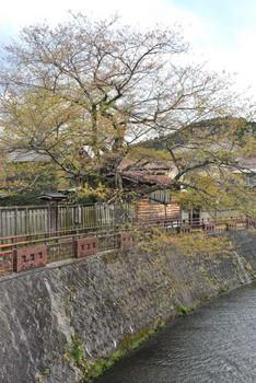 2011_04Taishomura_Magome0850b.JPG