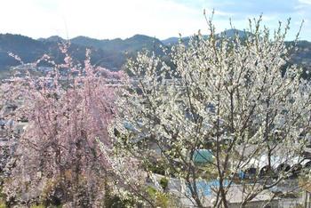 2011_04Taishomura_Magome0873b.JPG