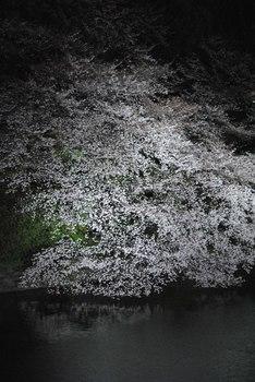 2012_04Chidorigafuchi1812.jpg