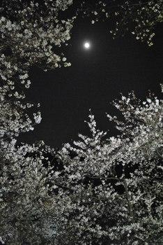 2012_04Chidorigafuchi1843.jpg