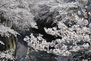 2012_04Kandagawa1922.jpg