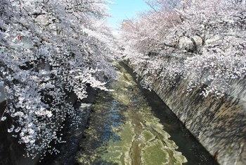 2012_04Kandagawa1923.jpg