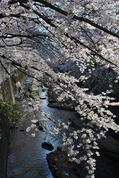 2012_04Kandagawa1978.jpg
