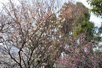 2014_01Kandagawa6368b.JPG