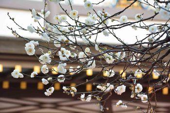 2014_01Tenjin6587b.jpg