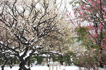 2014_02Koishikawa_korakuen6842b.JPG