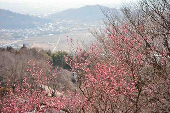 2014_02Tsukuba6673b.jpg