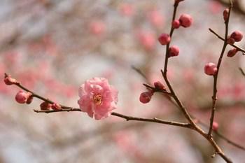 2014_02Tsukuba6703b.jpg