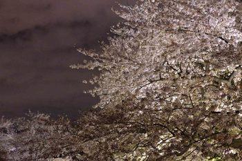 2014_04Chidorigafuchi6594b.JPG