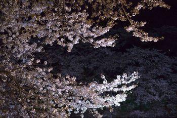 2014_04Chidorigafuchi6619b.JPG
