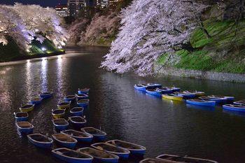 2014_04Chidorigafuchi6643b.JPG