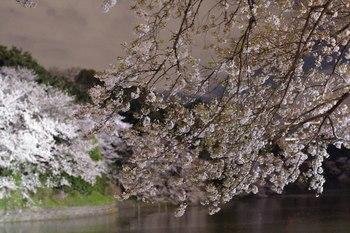 2014_04Chidorigafuchi6657b.JPG