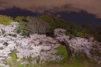 2014_04Chidorigafuchi6662b.JPG