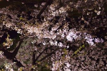 2014_04Chidorigafuchi6668b.JPG