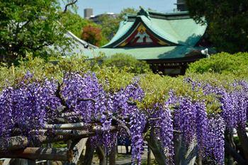 2014_04Kameido9384b.JPG