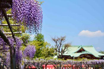 2014_04Kameido9414b.JPG
