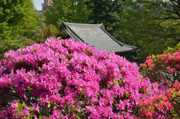 2014_04Nezujinjya9221b.JPG
