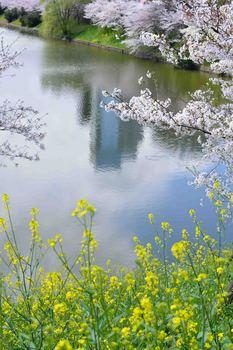 2014_04Sotobori6816b.JPG