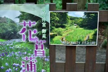 2014_06Meijijingu5503c.jpg