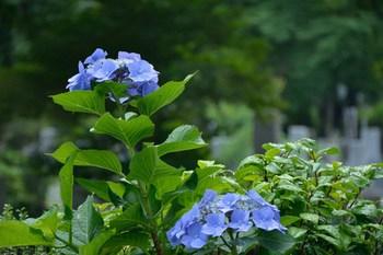 2014_06Shin_edogawa1038b.JPG