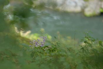 2014_09Hatonosu7365c.jpg