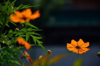 2014_09Kandagawa3413c.jpg