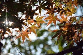 2014_09Kandagawa3592c.jpg