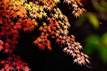 2014_11Kanazawa8244c.jpg