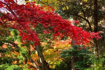 2014_11Kanazawa8325c.jpg