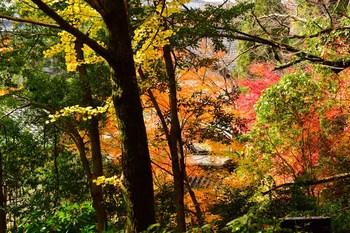 2014_11Kanazawa8342c.jpg