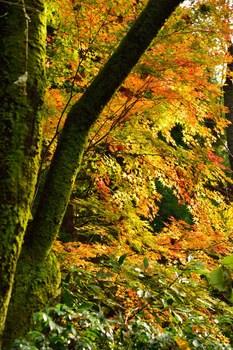 2014_11Kanazawa8353c.jpg