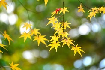 2014_11Kanazawa8408c.jpg