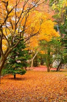 2014_11Kanazawa8515c.jpg