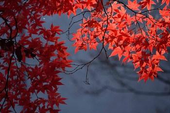 2014_11Sapporo_Hokudai4504c.jpg