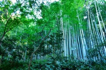 2014_12Kamakura0484c.jpg