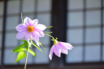 2014_12Kamakura0544c.jpg