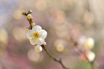 2015_02KoishikawaKorakuen1720c.jpg