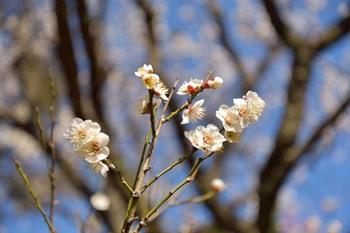 2015_02KoishikawaKorakuen1787c.jpg