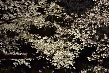 2015_03Chidorigafuchi2619c.jpg