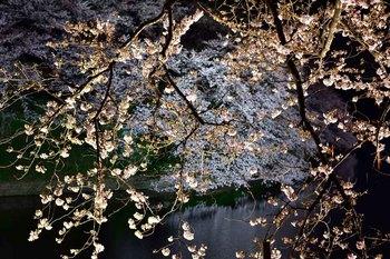 2015_03Chidorigafuchi2623c.jpg