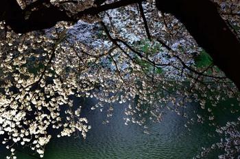 2015_03Chidorigafuchi2641c.jpg