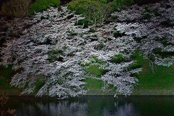 2015_03Chidorigafuchi2646c.jpg