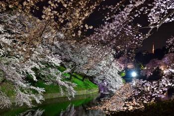 2015_03Chidorigafuchi2657c.jpg