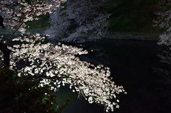 2015_03Chidorigafuchi2665c.jpg