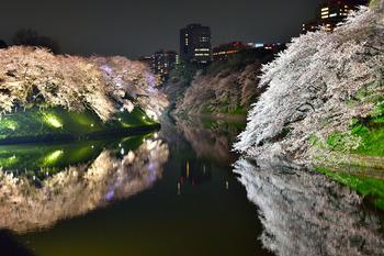2015_03Chidorigafuchi2701c.jpg