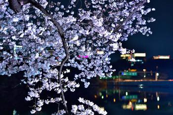 2015_03Chidorigafuchi2712c.JPG