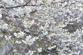2015_03Kandagawa1954c.jpg