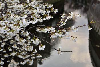 2015_03Kandagawa1959c.jpg
